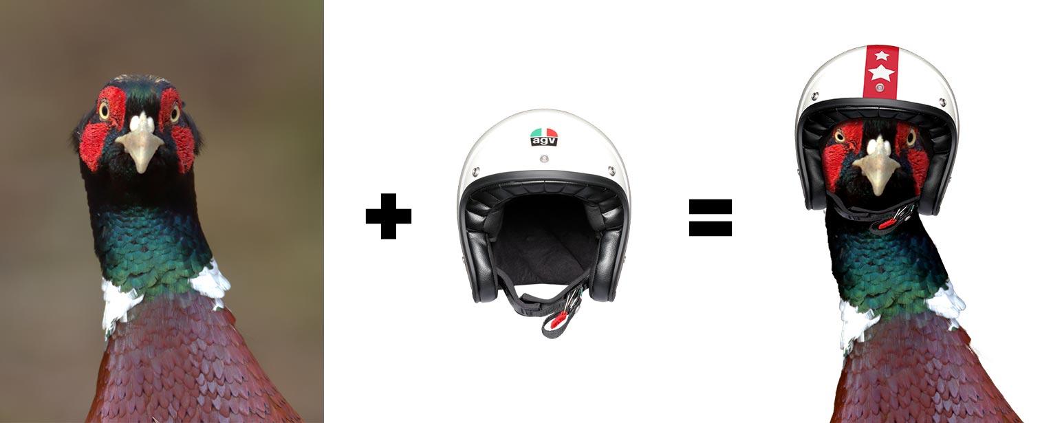 composizioni grafiche - Fagiano con casco